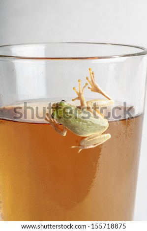 frog on glass of beer - stock photo