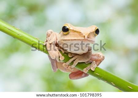 Frog on green bokeh background - stock photo