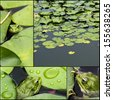 Frog on lily pad collage a macro background - stock photo