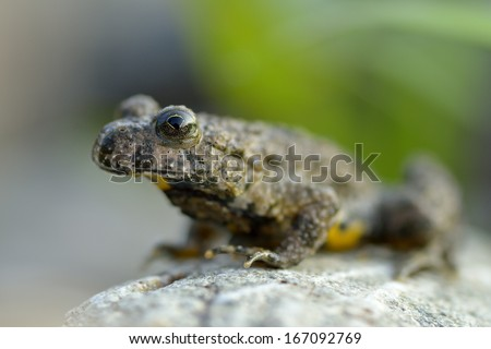 Frog on stone in nature