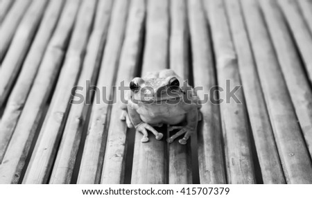 Frog on wood black and white. - stock photo
