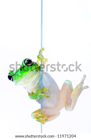 Frog peeking out from behind the glass - stock photo