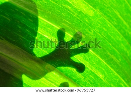 Frog resting on a leaf - stock photo