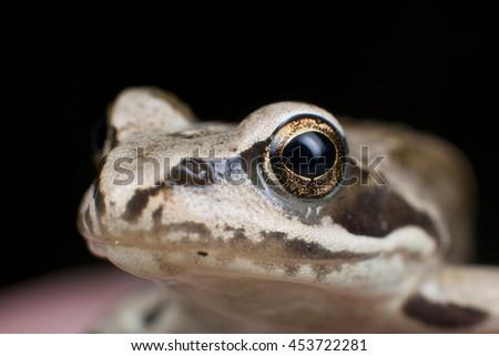 Frog's portrait - stock photo