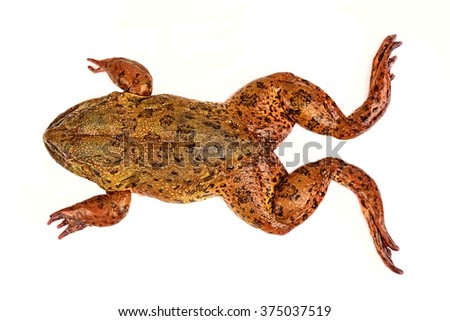 Frog Select focus.  - stock photo
