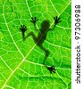 Frog shadow on the leaf - stock