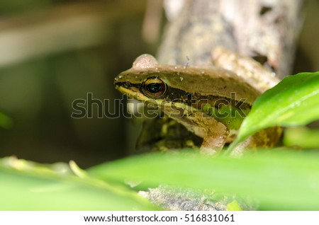 Frog sitting on a tree branch A beautiful green foliage.