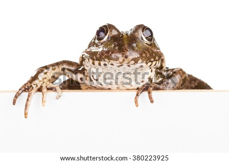 Frog with cardboard for text isolated on white background