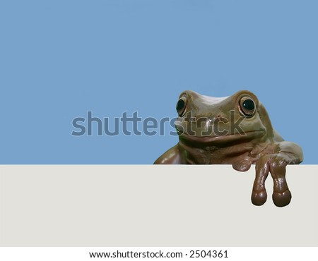 Frog with placard - stock photo