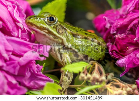 Frogs eyes close - stock photo