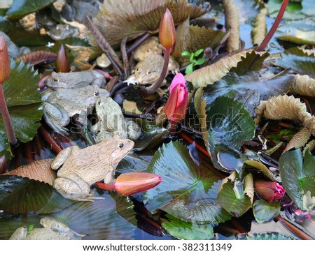 frogs sits on a lotus leaf