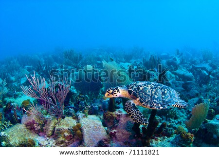 From a turtle's viewpoint, we're just another scuba diver. - stock photo