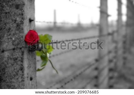 From Auschwitz II - Birkenau - stock photo