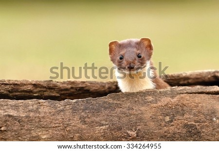 From log looking - stock photo