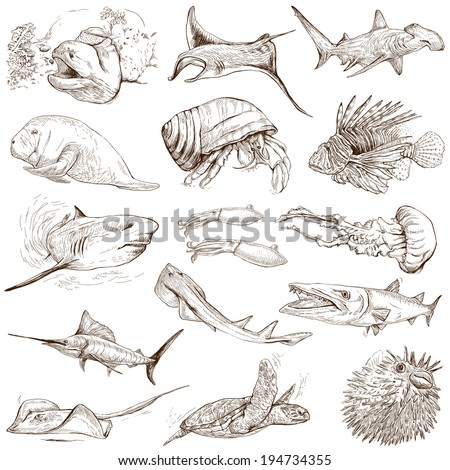From series: Underwater and Marine life (set no.2) - Collection of an hand drawn illustrations. Description: Full sized hand drawn illustrations drawing on white background. - stock photo