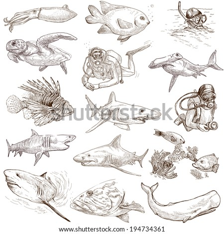 From series: Underwater and Marine life (set no.1) - Collection of an hand drawn illustrations. Description: Full sized hand drawn illustrations drawing on white background. - stock photo