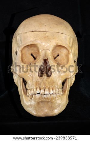 front of human skull - stock photo