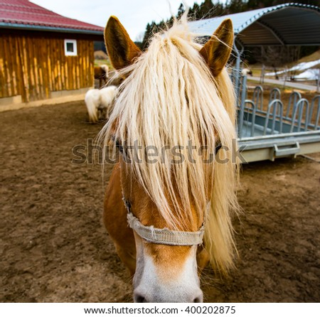 Front of the horse head - stock photo
