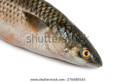 Front part of the body sea fish Mullet or Haarder, isolated on white - stock photo