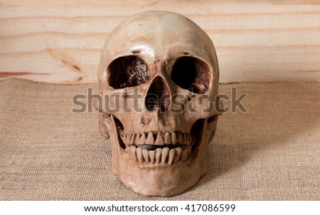 Front side view of human skull - stock photo