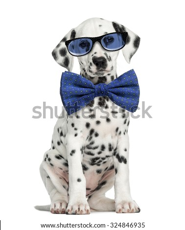 Front view of a Dalmatian puppy  wearing glasses and sitting, facing, isolated on white - stock photo