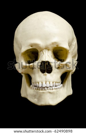 Front view of a fake skull isolated on black background - stock photo