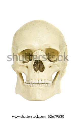 Front view of a fake skull isolated on white - stock photo