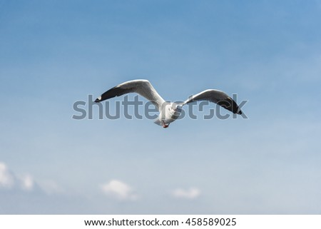 Front View of A Seagull flying Wingspan with Clear Blue Sky and Clouds Background. - stock photo