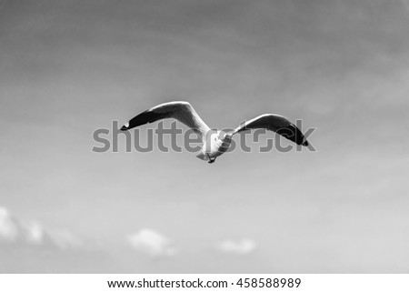 Front View of A Seagull flying Wingspan with Clear Blue Sky and Clouds Background in Black and White Tone - stock photo