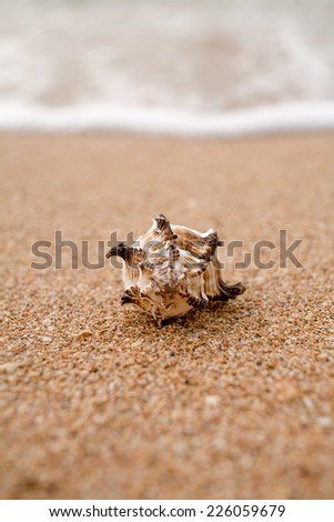 Front view of a shell against surf macro shot. Blurred background