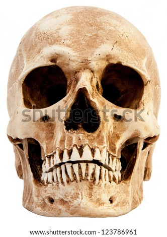 human skull stock images, royalty-free images & vectors | shutterstock, Skeleton