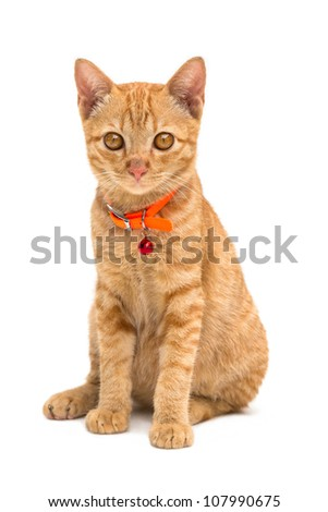 Front view of  Kitten (American Short Hair), Animal portrait on white background - stock photo