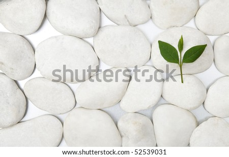 front view white stones and green leaf - stock photo