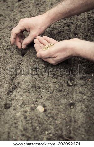 Frontal portrait view of human hands planting spinach seeds into the ground.