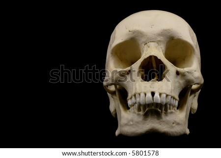 Frontal view of human skull isolated on black background - stock photo
