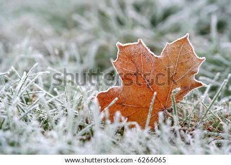 Frost - stock photo