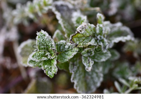 frost and froze,mildew  for Highest point of Doi Inthanon, Chiang Mai, Thailand - stock photo