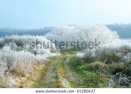 Frost covered nature - stock photo