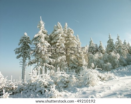 Frost covered pine trees on a mountain top on a sunny morning. - stock photo
