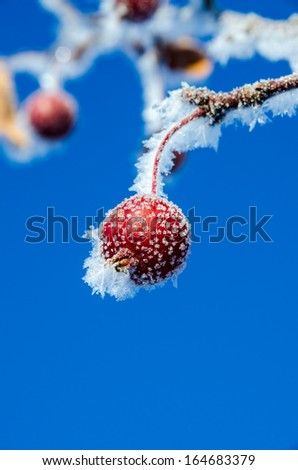 Frost covered red berry - stock photo
