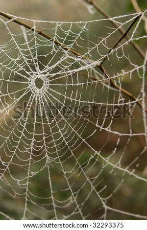 Frost-covered Spider web held by a branch. There is a relatively shallow depth of field, ensuring that the background remains blurred.