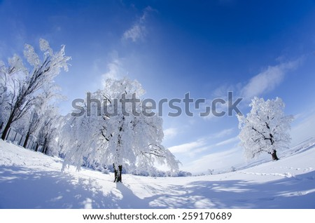 Frost covered tree in beautiful natural light against bright blue sky