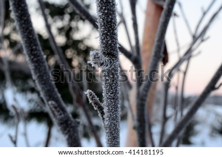 frost covered tree outside in winter