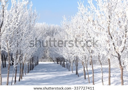 frost covered trees in winter - stock photo