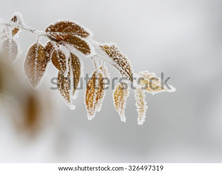 Frost on colorful leaves - stock photo