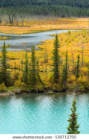 Frost on pine trees in Bow Valley Banff National Park Alberta Canada - stock photo
