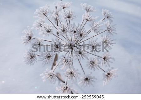 frost on the branch, flower - stock photo