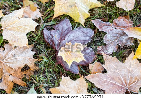 Frost on the ground covered with dry  leaves - stock photo