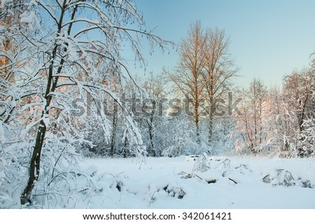Frost on the trees in the forest. Cold winter day at sunset. Frost and snow on the branches. Winter nature. Panorama of the winter forest. The winter landscape. Snow fairy forest. - stock photo
