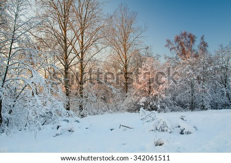 Frost on the trees in the forest. Cold winter day at sunset. Frost and snow on the branches. Winter nature. Panorama of the winter forest. Winter landscape. Snow fairy forest. Pink rays of the sun. - stock photo